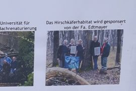 Edtmayer Hirschkäferhabitat